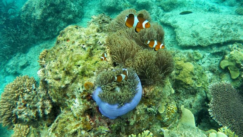 Les plus beaux sites pour la plongée et le snorkeling aux Maldives